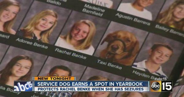 Hunde Bilder Ausdrucken Kostenlos Herunterladen - Hunde Bilder Ausdrucken Kostenlos Herunterladen