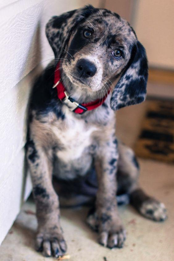 Hunde Bilder Für Facebook - Hunde Bilder Für Facebook