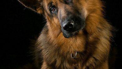 Hunde Bilder Gezeichnet 390x220 - Hunde Bilder Gezeichnet