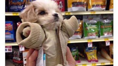 Hunde Bilder Gezeichnet Für Facebook 390x220 - Hunde Bilder Gezeichnet Für Facebook