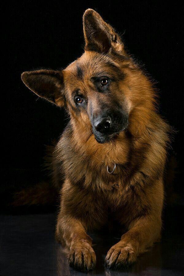 Hunde Bilder Gezeichnet - Hunde Bilder Gezeichnet