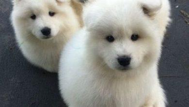 Hunde Bilder Gratis Für Facebook 390x220 - Hunde Bilder Gratis Für Facebook