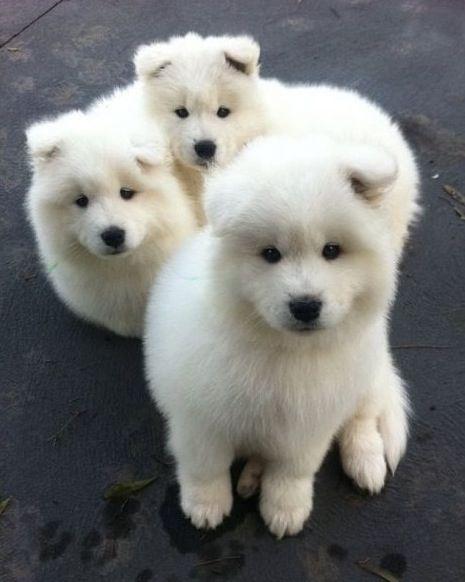 Hunde Bilder Gratis Für Facebook - Hunde Bilder Gratis Für Facebook