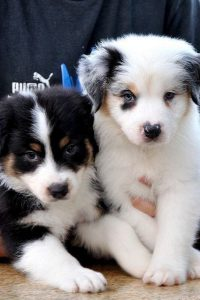 Hunde Bilder Gratis Kostenlos 200x300 - Hunde Bilder Gratis Kostenlos