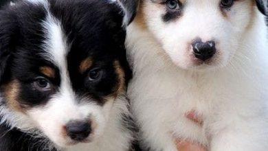 Hunde Bilder Gratis Kostenlos 390x220 - Hunde Bilder Gratis Kostenlos