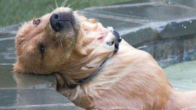 Hunde Bilder Gratis Kostenlos Herunterladen 390x220 - Hunde Bilder Gratis Kostenlos Herunterladen