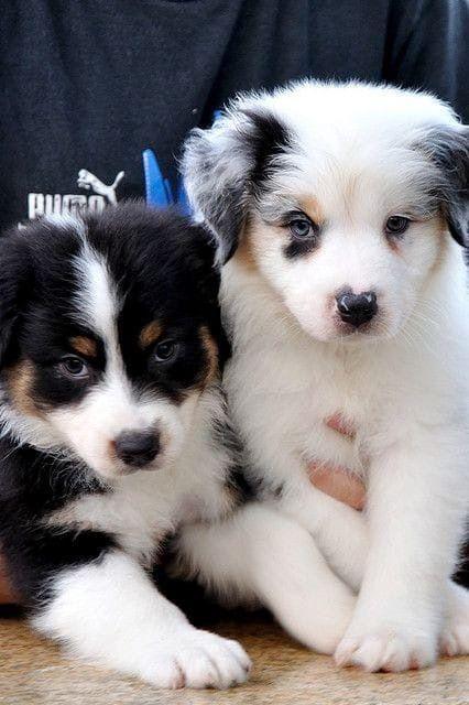 Hunde Bilder Gratis Kostenlos - Hunde Bilder Gratis Kostenlos