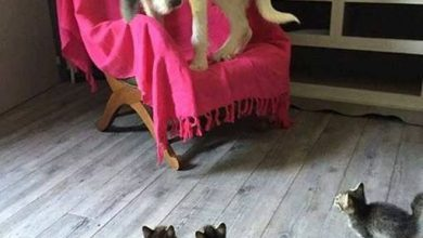 Hunde Bilder Kaufen Für Facebook 390x220 - Hunde Bilder Kaufen Für Facebook