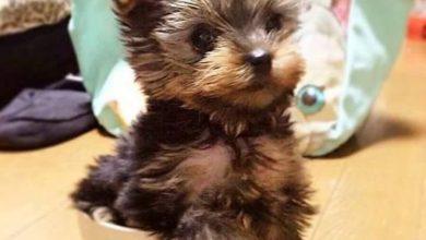 Hunde Bilder Kaufen Kostenlos Herunterladen 390x220 - Hunde Bilder Kaufen Kostenlos Herunterladen