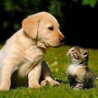Hunde Bilder Kaufen Kostenlos - Hunde Bilder Kaufen Kostenlos