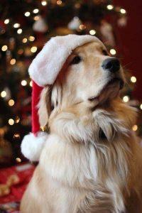 Hunde Bilder Kostenlos Ausdrucken 200x300 - Hunde Bilder Kostenlos Ausdrucken