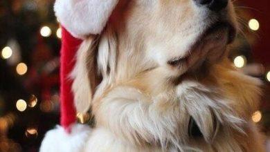 Hunde Bilder Kostenlos Ausdrucken 390x220 - Hunde Bilder Kostenlos Ausdrucken