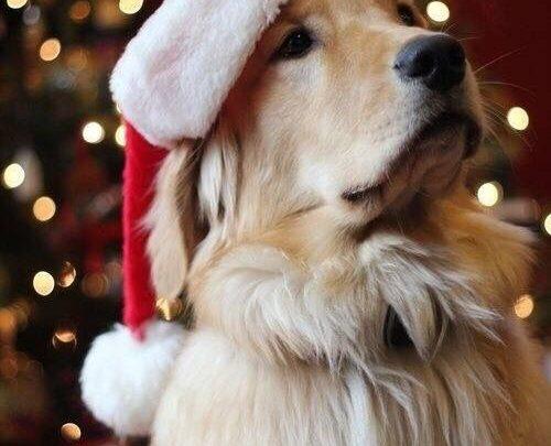 Hunde Bilder Sprüche