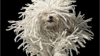 Hunde Bilder Kostenlos Ausdrucken Für Facebook 390x220 - Hunde Bilder Kostenlos Ausdrucken Für Facebook