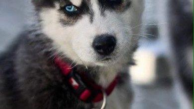 Hunde Bilder Kostenlos Ausdrucken Für Whatsapp 390x220 - Hunde Bilder Kostenlos Ausdrucken Für Whatsapp