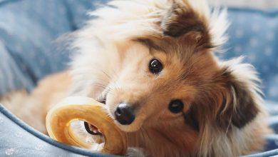 Hunde Bilder Kostenlos Ausdrucken Kostenlos 390x220 - Hunde Bilder Kostenlos Ausdrucken Kostenlos