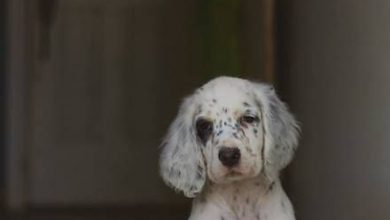 Hunde Bilder Kostenlos Downloaden 390x220 - Hunde Bilder Kostenlos Downloaden