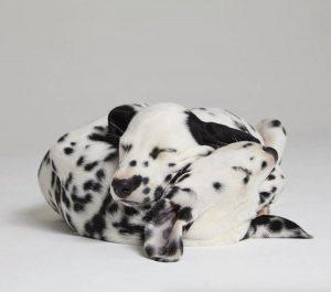 Hunde Bilder Kostenlos Downloaden Kostenlos 300x265 - Hunde Bilder Kostenlos Downloaden Kostenlos