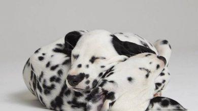 Hunde Bilder Kostenlos Downloaden Kostenlos 390x220 - Hunde Bilder Kostenlos Downloaden Kostenlos