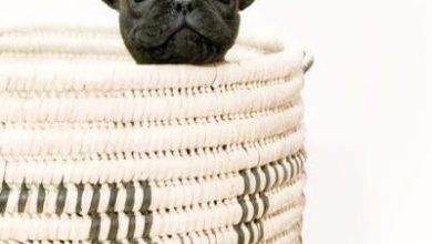 Hunde Bilder Kostenlos Kostenlos 390x220 - Hunde Bilder Kostenlos Kostenlos