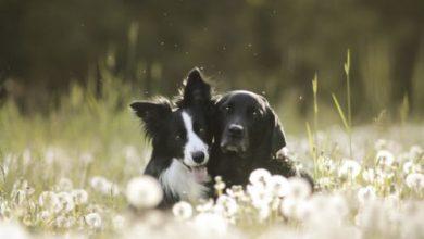 Hunde Bilder Kostenlos Kostenlos Herunterladen 390x220 - Hunde Bilder Kostenlos Kostenlos Herunterladen