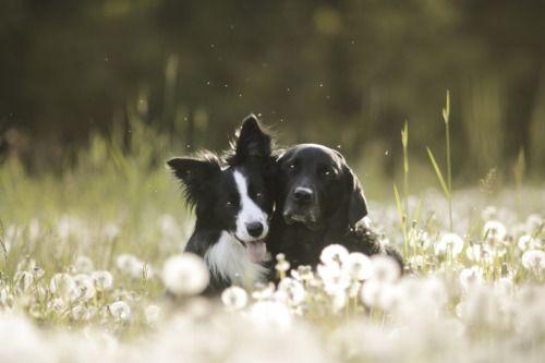 Hunde Bilder Kostenlos Kostenlos Herunterladen - Hunde Bilder Kostenlos Kostenlos Herunterladen