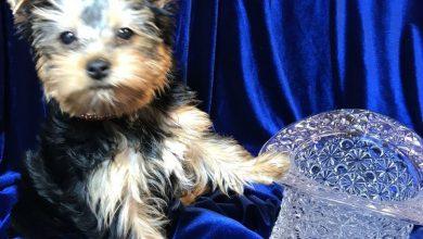 Hunde Bilder Kostenlos Runterladen 390x220 - Hunde Bilder Kostenlos Runterladen
