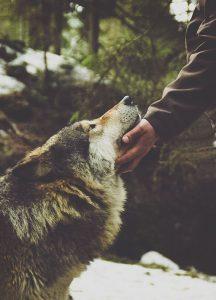 Hunde Bilder Kostenlos Runterladen Für Facebook 216x300 - Hunde Bilder Kostenlos Runterladen Für Facebook