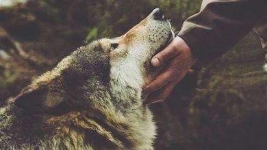 Hunde Bilder Kostenlos Runterladen Für Facebook 390x220 - Hunde Bilder Kostenlos Runterladen Für Facebook