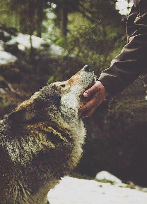 Hunde Bilder Kostenlos Runterladen Für Facebook - Hunde Bilder Kostenlos Runterladen Für Facebook