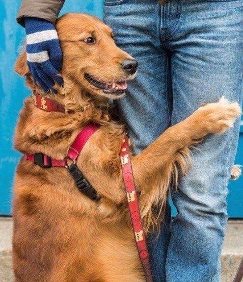 Hunde Bilder Kostenlos Runterladen Kostenlos - Hunde Bilder Kostenlos Runterladen Kostenlos
