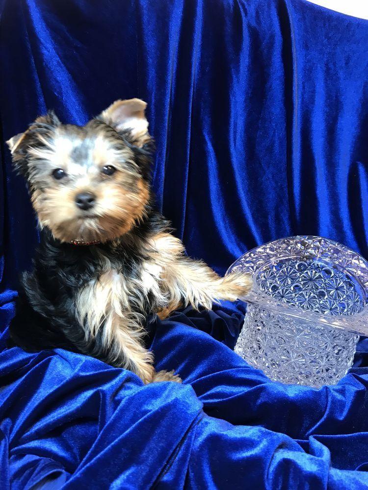 Hunde Bilder Kostenlos Runterladen - Hunde Bilder Kostenlos Runterladen