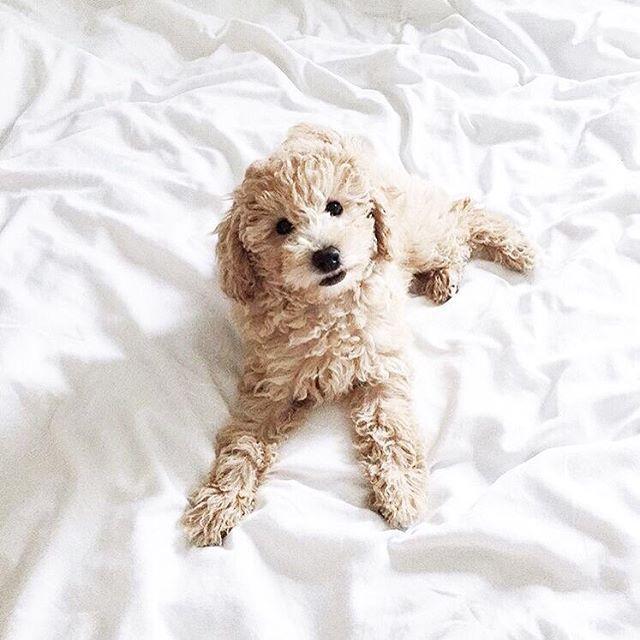Hunde Bilder Kostenlos Zum Ausdrucken Für Facebook - Hunde Bilder Kostenlos Zum Ausdrucken Für Facebook