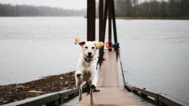 Hunde Bilder Kostenlos Zum Ausdrucken Für Whatsapp 390x220 - Hunde Bilder Kostenlos Zum Ausdrucken Für Whatsapp