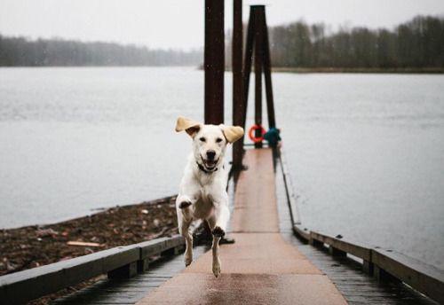 Hunde Bilder Kostenlos Zum Ausdrucken Für Whatsapp - Hunde Bilder Kostenlos Zum Ausdrucken Für Whatsapp