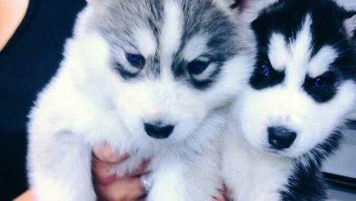 Hunde Bilder Kostenlos Zum Ausdrucken Kostenlos 390x220 - Hunde Bilder Kostenlos Zum Ausdrucken Kostenlos