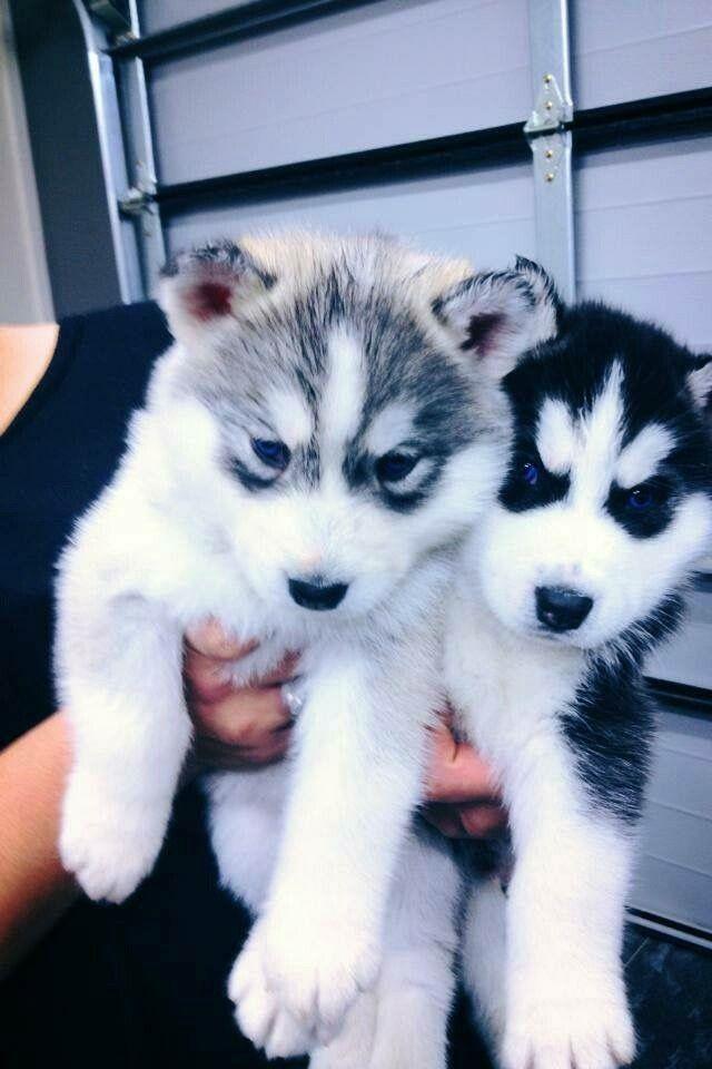 Hunde Bilder Kostenlos Zum Ausdrucken Kostenlos Bilder Und Sprüche