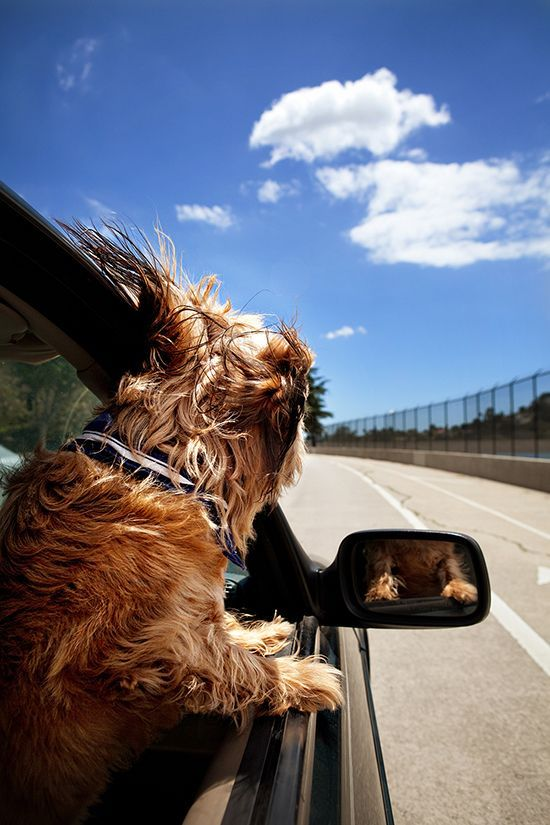 Hunde Bilder Kostenlos - Hunde Bilder Kostenlos
