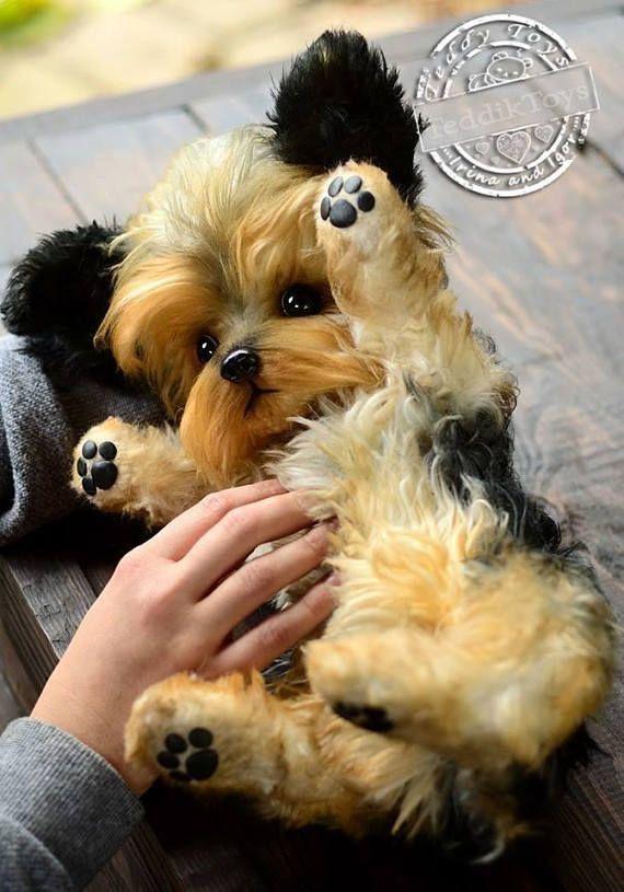 Hunde Bilder Lustig Kostenlos - Hunde Bilder Lustig Kostenlos