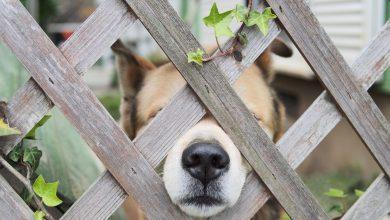 Hunde Bilder Mit Lustigen Sprüchen 390x220 - Hunde Bilder Mit Lustigen Sprüchen