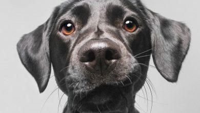 Hunde Bilder Mit Lustigen Sprüchen Für Whatsapp 390x220 - Hunde Bilder Mit Lustigen Sprüchen Für Whatsapp