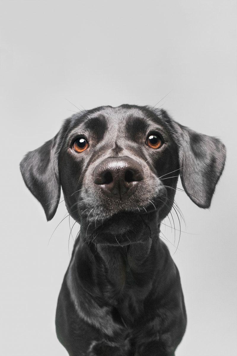 Hunde Bilder Mit Lustigen Sprüchen Für Whatsapp - Hunde Bilder Mit Lustigen Sprüchen Für Whatsapp