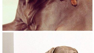 Hunde Bilder Mit Lustigen Sprüchen Kostenlos Herunterladen 390x220 - Hunde Bilder Mit Lustigen Sprüchen Kostenlos Herunterladen