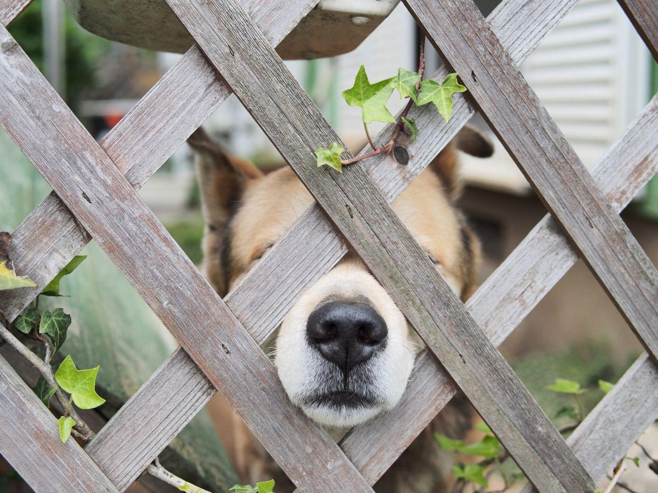 Hunde Bilder Mit Lustigen Sprüchen - Hunde Bilder Mit Lustigen Sprüchen