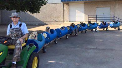 Hunde Bilder Mit Sprüchen Kostenlos 390x220 - Hunde Bilder Mit Sprüchen Kostenlos