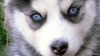 Hunde Bilder Rassen 390x220 - Hunde Bilder Rassen