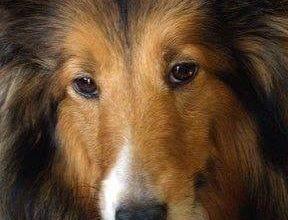 Hunde Bilder Rassen Für Facebook 288x220 - Hunde Bilder Rassen Für Facebook
