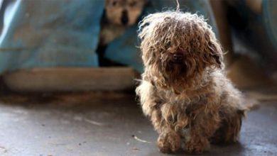 Hunde Bilder Rassen Kostenlos 390x220 - Hunde Bilder Rassen Kostenlos
