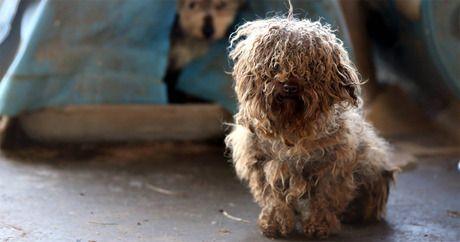 Hunde Bilder Rassen Kostenlos - Hunde Bilder Rassen Kostenlos
