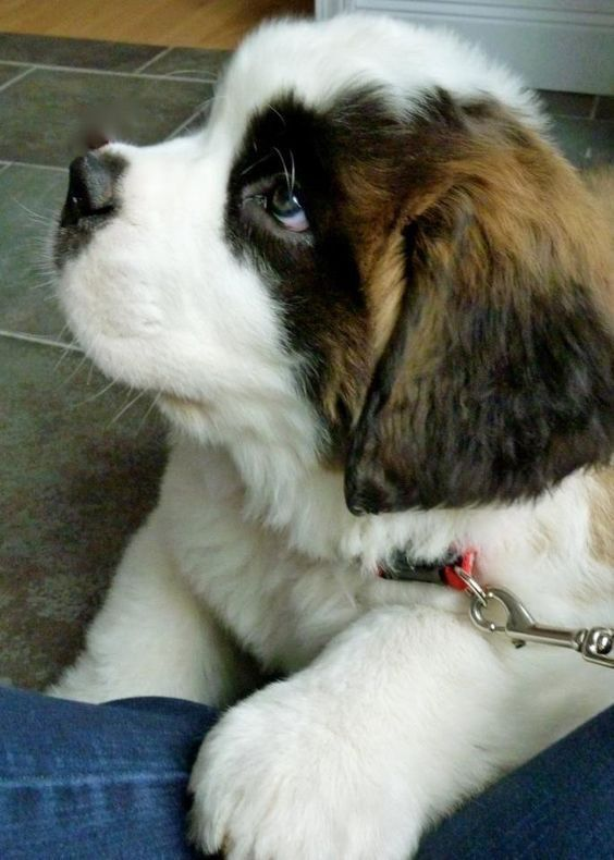 Hunde Bilder Süß Für Facebook - Hunde Bilder Süß Für Facebook